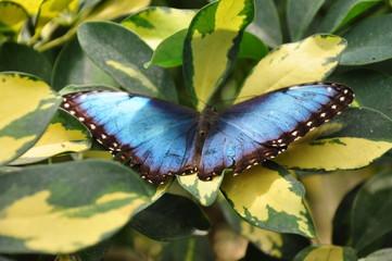 les papillons du chateau de goulaine