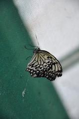 les papilons du chateau de goulaine