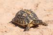 Turtle on the sandy beach.