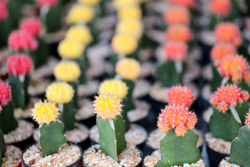 Small colorful cactus.