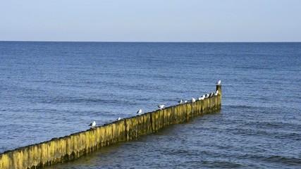 Buhne am Ostseestrand in Polen