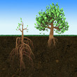 Big tree with small roots and little  tree with large roots