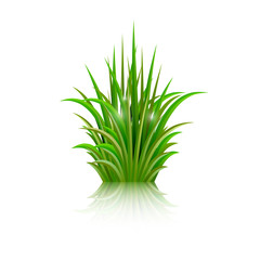 Green grass with reflection isolated on white background. Vector