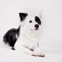 black and white dog 44