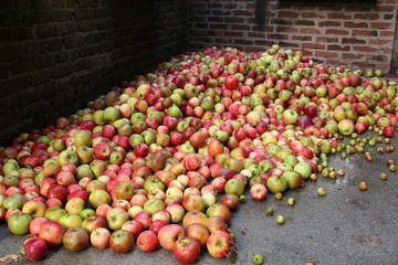 Apfelwein keltern
