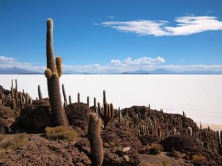 Giant cactus and Uyuni salt lake