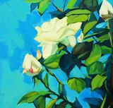 Blossoming bush of white roses