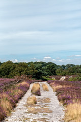 Arne Nature Reserve, Dorset, England, UK