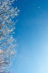 青空に舞い散る雪