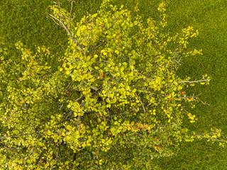 Apfelbaum aus der Luft