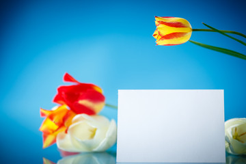 bouquet of tulips with a blank