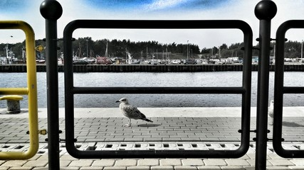 Seagull behind the banister