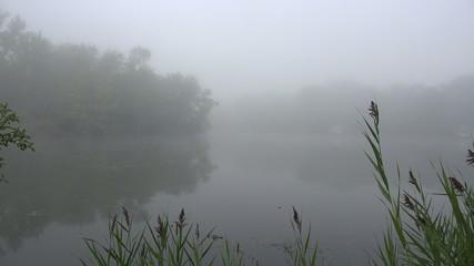 Fog, Foggy, Mist, Spring