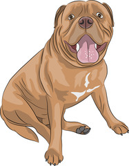 vector Bordeaux mastiff