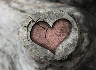 Herz Holzstamm