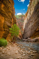 virgin river in zion national park utah
