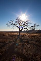 Gioco di luce con albero
