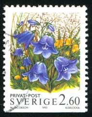 flower Bluebell