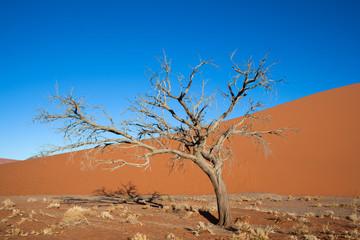 Albero secco nel deserto