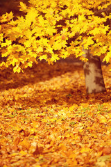 Fall, autumn, leaves background. A tree branch with autumn leave