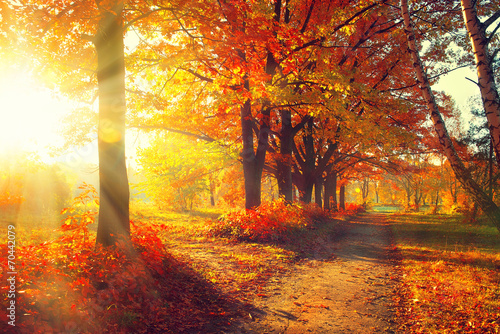 canvas print picture Fall. Autumn Park. Autumnal Trees and Leaves in sun rays