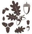 ������, ������: Oak Acorn