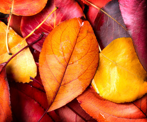 Autumn background. Colorful autumnal leaves