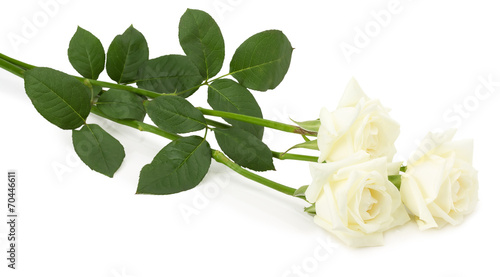 Papiers peints Roses wight roses isolated on the white background