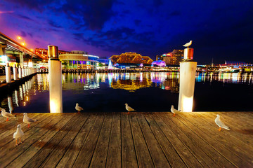 Seagulls in Sydney harbour at night with reflections of the city