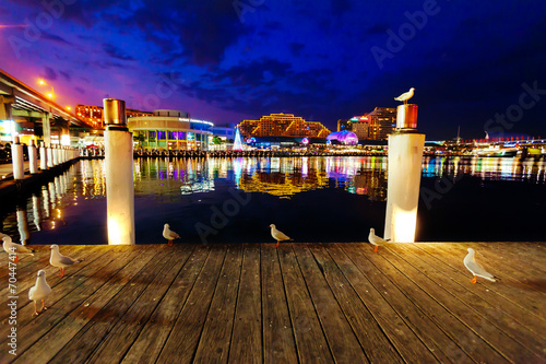 Aluminium Poort Seagulls in Sydney harbour at night with reflections of the city