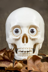 Toy skull with dry leaves