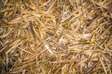 dry bamboo leaves