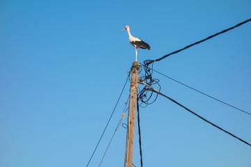 Stork on a pole