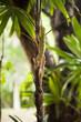 Baby Iguana Hiding