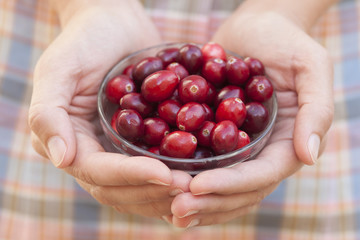 Cranberry in woman's palms