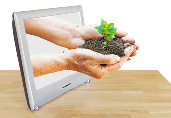 handful of soil with plant leads out TV screen