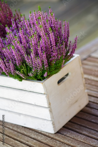 canvas print picture Calluna Vulgaris Heidekraut Dekoration