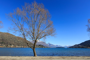 single tree at Franton beach, Queenstown, New Zealand