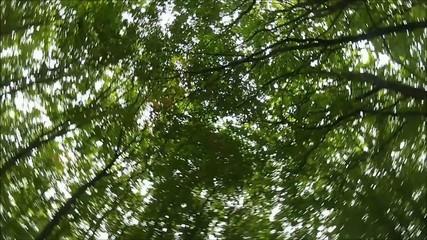 Sonnenlicht fällt durch den Wald