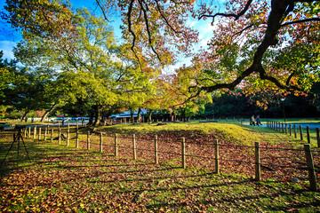 Nara Part Japan at fall