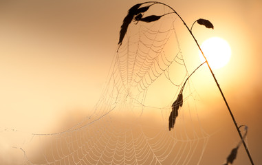 spiderweb at sunrise close up