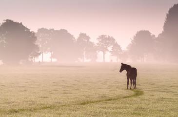 źrebię sylwetka na pastwisko we mgle