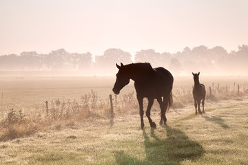 horse and foal silhouettes in fog © Olha Rohulya