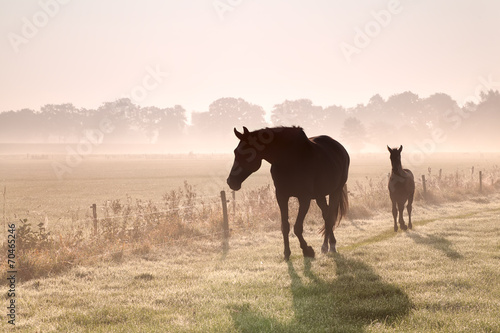Papiers peints Chevaux horse and foal silhouettes in fog