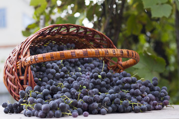 baskets with nature grapes