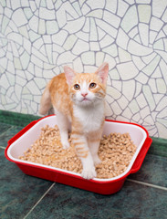 cat in the toilet