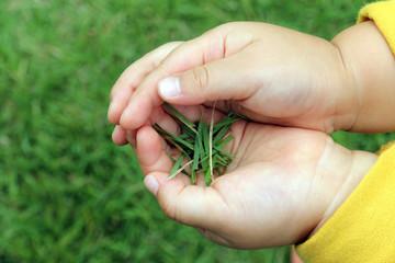 芝を摘む子供の手_アップ