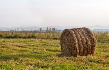 dry hay bale