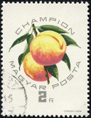 stamp printed in Hungary shows artwork of apricots