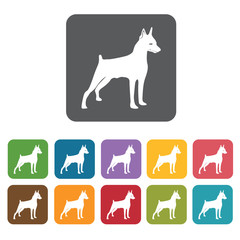 Doberman icon. Dog icons set. Rectangle colourful 12 buttons. Ve